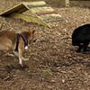 Dante (puppy), Foxi 5