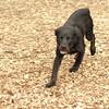 Dante (puppy, black) 15