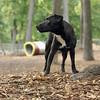 FAITH (patterdale terrier) 4