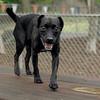 FAITH (patterdale terrier) 3
