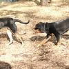 Jackie ( rottie puppy), DIVA (housemates)