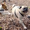 Jack ( puppy, 1st time) , Winston 4
