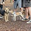 Jack ( puppy, 1st time) & Maddie, Saka 2