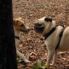 Jack ( puppy, 1st time) , Winston 3