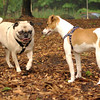 Jack ( puppy, 1st time) , Winston