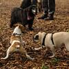 Jack ( puppy, 1st time) , Winston 2