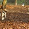 Jack ( puppy), jet, oliver, lucy RUN 2