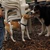 Jack ( puppy, 1st time) & Oliver 2