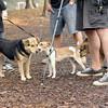Jack ( puppy, 1st time) & Maddie, Saka