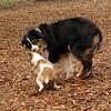 Jack ( puppy, 1st time) & Oliver