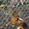 Isabelle (puppy), Chloe, Shamus