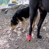 Harley ( toe still heals), Maddie