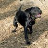 DANTE (new, puppy)