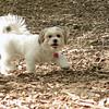 LUCAS (new, pup) 3 FIX
