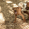 Lucas, Duffy, Maggie (pups) 2