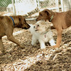 Lucas, Duffy, Maggie (pups)