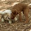 LUCAS & DUFFY (pups) FIX