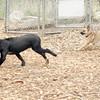 Dante (puppy), Spike 2