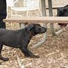 Dante (puppy), Eubie