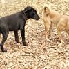 Dante (puppy), Spike 5
