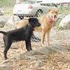 Dante (puppy), Charlie (girl)