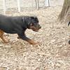 Dante (puppy), Eubie 2