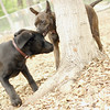 Dante (puppy), Mocha