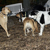 Buffy, Sammy, Buddy, Marley_00001