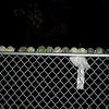 balls on fence_00002