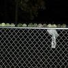 balls on fence_00003