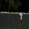 balls on fence_00001