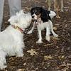 General (puppy), Sambucca_00002