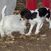 General (puppy), Sambucca_00001