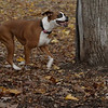 BOOTS (boxer girl)_00006