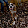 BOOTS (boxer girl)_00005