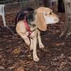 DAISY (new puppy)_00007
