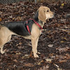 DAISY (new puppy)_00008