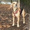 DAISY (new puppy)_00006