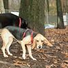 DAISY (new puppy)_00005