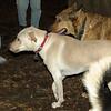 Bailey (younger), Buddy (shepherd)_00002