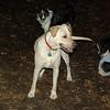 bailey (younger), oreo, roxy_00001