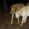 Bailey (younger), Buddy (shepherd)_00008