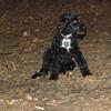 DEWEY ( water dog puppy)_00004