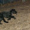 DEWEY ( water dog puppy)_00001