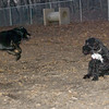 Dante (pup), Dewey (puppy)_00003