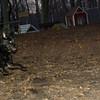 Dante (pup), Dewey (puppy)_00002