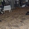 Dante (pup), Dewey (puppy)_00001