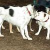 Daisy (bulldog pup), Marley_00001