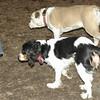 Daisy (pup visits), General_00001