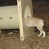 DAISY (bulldog pup visits)_00002